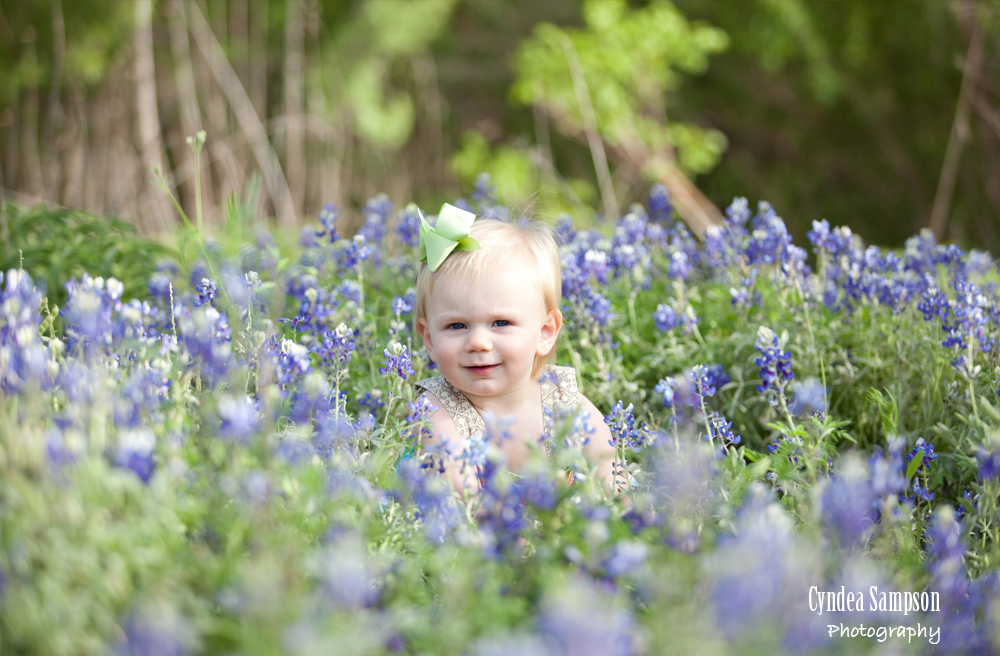 single bluebonnets